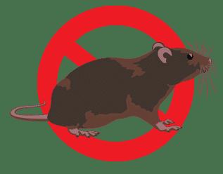 20+ Cách Đuổi Chuột Ra Khỏi Nhà Tận Gốc Đơn Giản Mà Hiệu Quả Nhất
