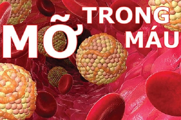 hình ảnh Top 6 loại thuốc uống cho người bị máu nhiễm mỡ hiệu quả - số 8