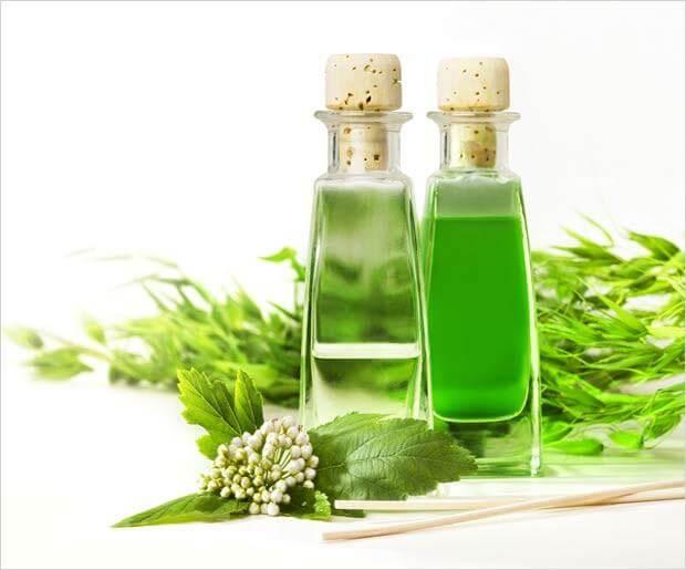 chiết xuất trà xanh - thành phần viên uống giảm cân garcinia