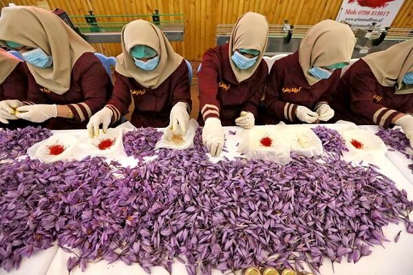 Nhụy hoa nghệ tây saffron của nước nào tốt nhất