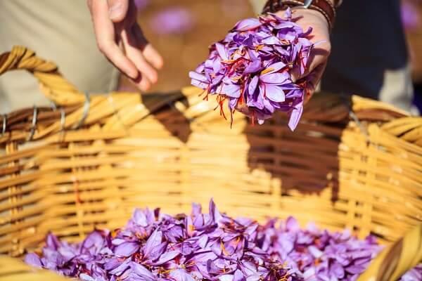 nhụy hoa nghệ tây saffron tốt nhất 1