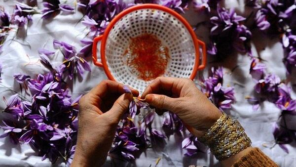 nhụy hoa nghệ tây saffron tốt nhất