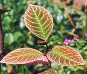 hình ảnh Review Herbal Stomaxcare có tốt không? Giá bao nhiêu? Mua ở đâu - số 3