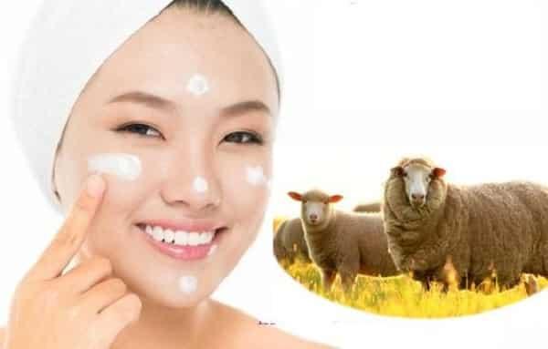 Viên Uống Nhau Thai Cừu Loại Nào Tốt Nhất