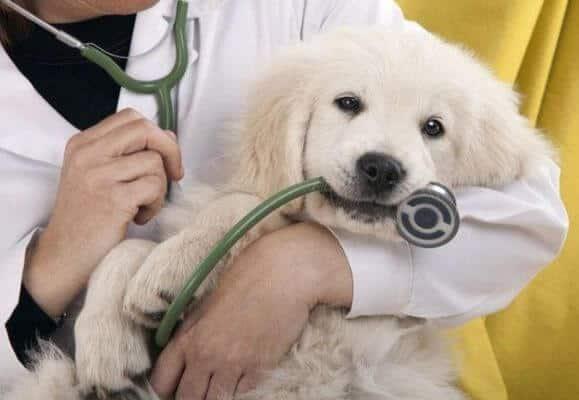 hình ảnh Danh sách phòng khám và bệnh viện thú y tốt nhất TP.Hồ Chí Minh - số 3