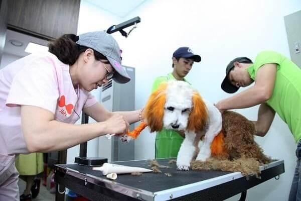 hình ảnh Danh sách phòng khám và bệnh viện thú y tốt nhất TP.Hồ Chí Minh - số 5