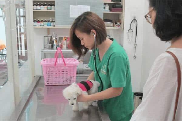 hình ảnh Danh sách phòng khám và bệnh viện thú y tốt nhất TP.Hồ Chí Minh - số 10