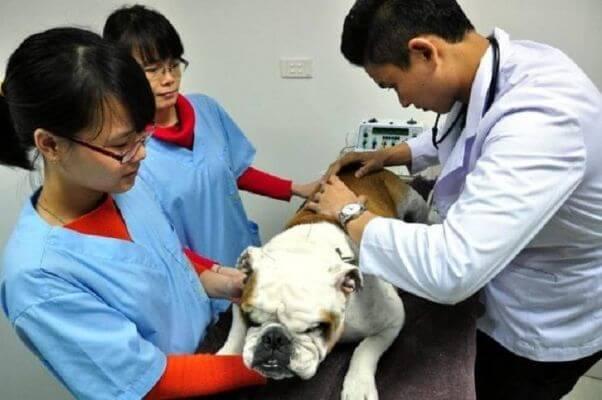 hình ảnh Danh sách phòng khám và bệnh viện thú y tốt nhất TP.Hồ Chí Minh - số 9
