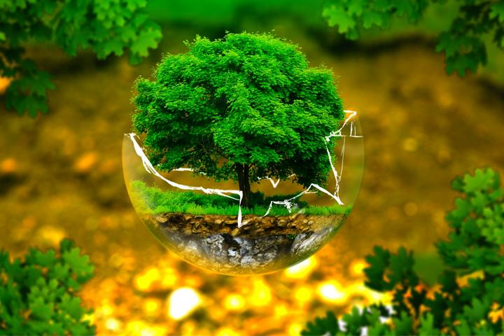 hình ảnh Dịch Vụ Cấp Giấy Chứng Nhận ISO 14001 Uy Tín Tại TPHCM - số 2
